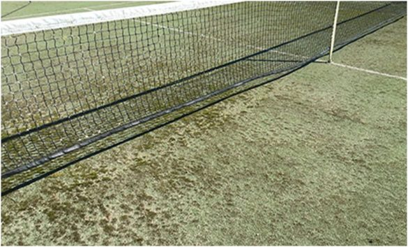 Tips to kill moss on your tennis court surface